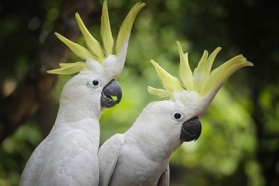 Vogelvoliere kaufen Kakadu