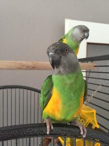 Gelbes Papageienspielzeug
