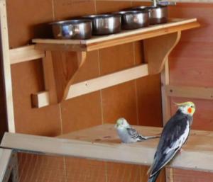 Voliere bauen - Futterplatz auf einem Regal