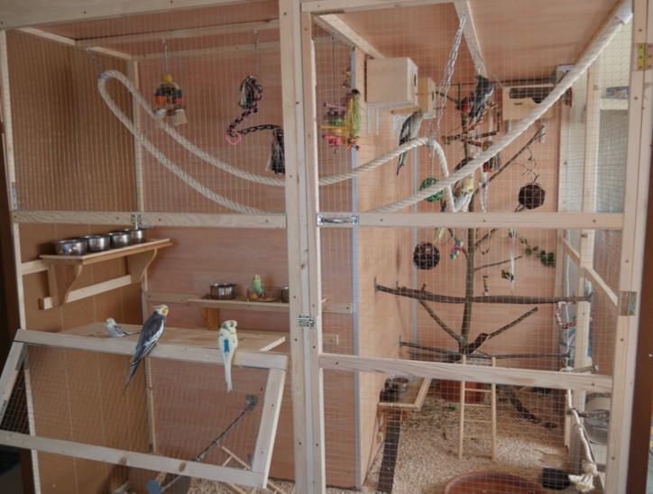 Voliere selber bauen bauanleitung für eine innenvoliere