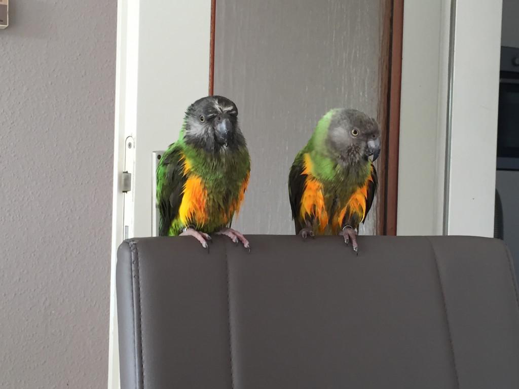 Coco und Chico nach dem Baden