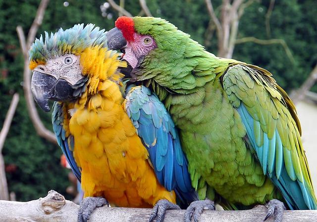 XXL Vogelvoliere kaufen für Großpapageien