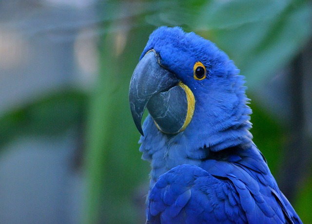 Papageienkrankheiten Macaw