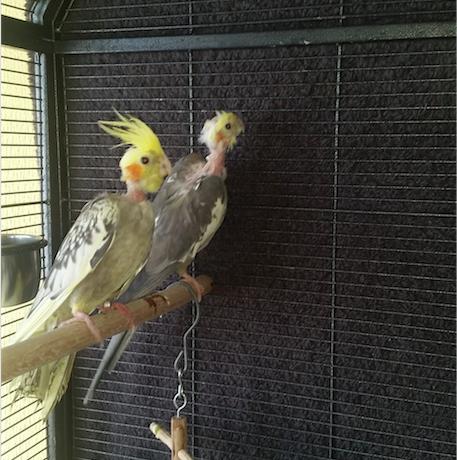 Handicap Birds 1