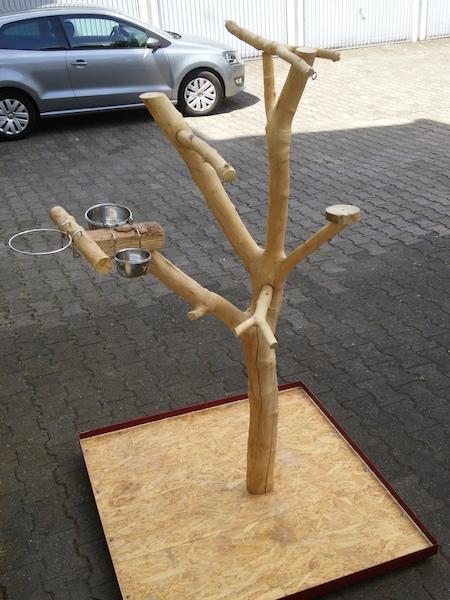 Papageienfreisitz selber bauen