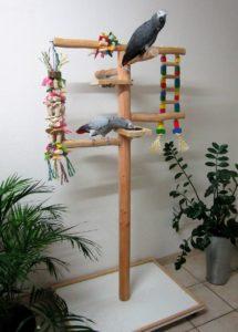 papageienfreisitz-kaufen-1