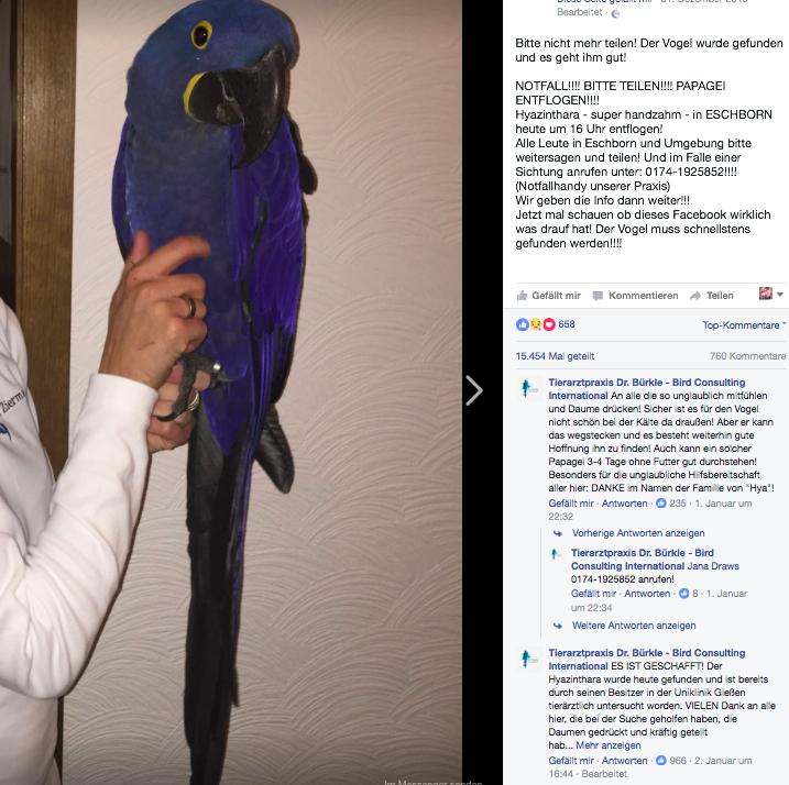 Papagei vermisst