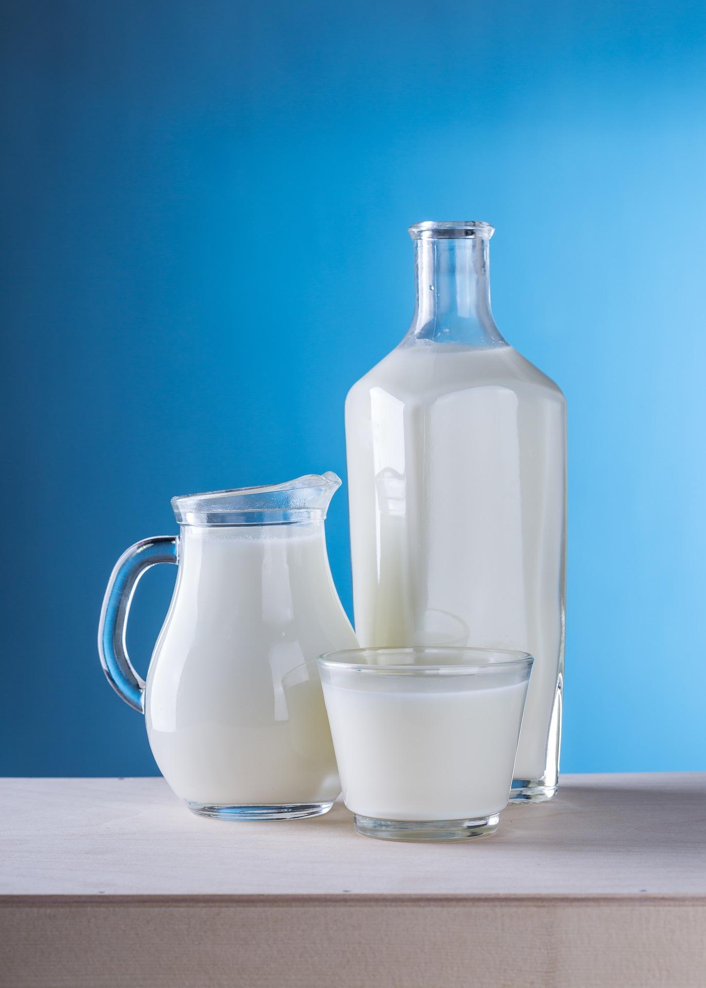 Papagei Milch Joghurt