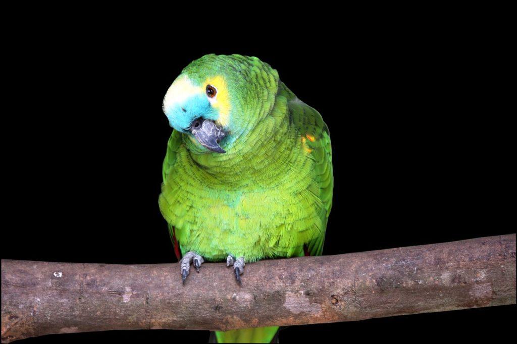 darf ich papagei einzeln halten