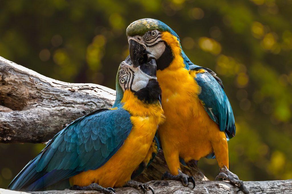 papagei lebenserwartung