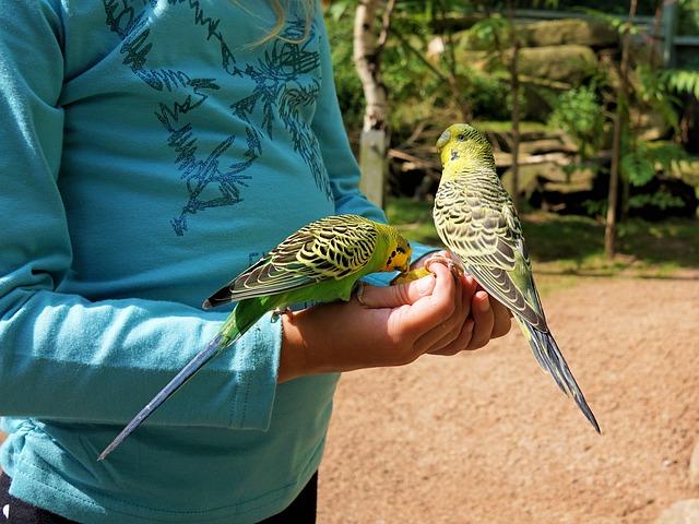 was dürfen Papageien nicht fressen