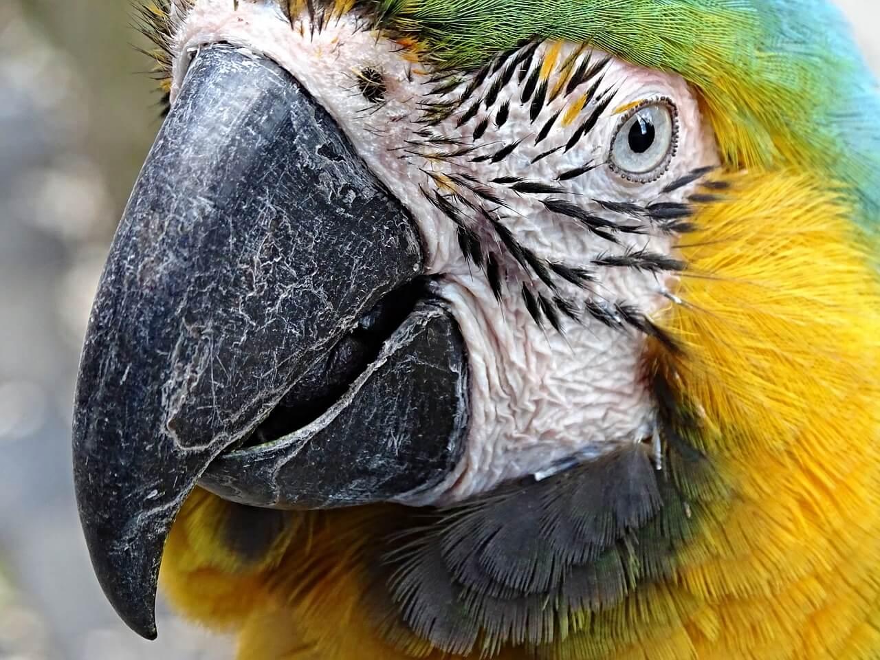 papageienkäfig ara