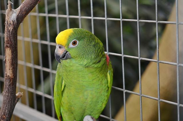 Papagei einzeln halten