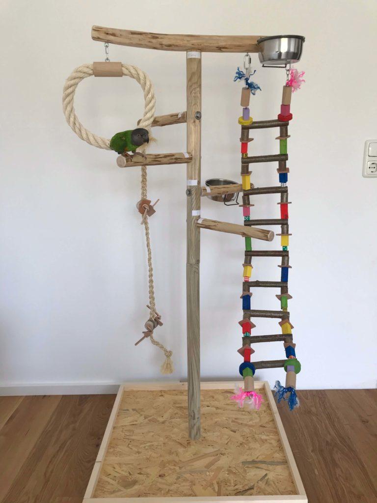 Papagei Freisitz kaufen